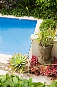 Succulents around pool in Mediterranean garden with meditative atmosphere
