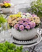 A variety of chrysanthemums in plant pot