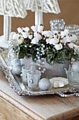 Cyclamen 'Bellissima White' on silver tray