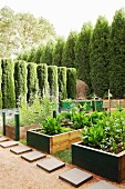 Garden with linear hedge of trees and wooden raised vegetable beds