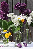 Twigs of lilac & summer flowers in glass bottles