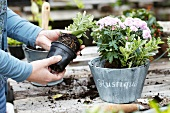 Woman taking small plant out of plastic pot