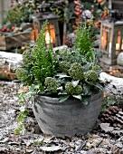 Winter arrangement of hardy plants