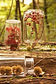 Leaves, berries and sweet chestnuts in upturned jars in autumn woodland