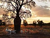 Festlich gedeckter Tisch unter einem Baum bei Abenddämmerung