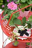 Freshly picked sprig of blackberries on rose-patterned plate and pink flower on small, red metal side table