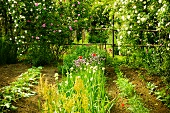Vegetable patch and rose bushes in garden