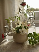 White violas in spherical vase in front of bottle with vintage stopper