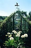Gewächshaus mit Wetterfahne, im Vordergrund blühende Schmucklilie