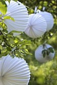 Paper lanterns as decoration for garden party