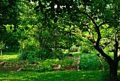 Vegetable patch in wild garden