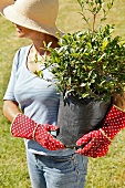 Woman carrying potted plant in garden