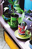 Small plants in tin cans on shelf