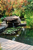 Aquatic plants and small waterfall in garden pond