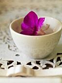 Lila Blüte in einer Wasserschale