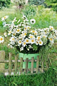 Bouquet of ox-eye daisies in metal bucket and miniature bench on lawn