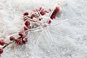 Dekostern aus Glas und Ilexbeeren im Kunstschnee