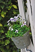 Flowering plant in hanging plant pot