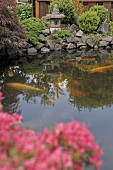 Goldfish in pond in Japanese-style garden