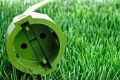 Green plug in grass