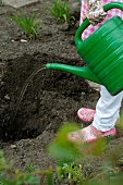 Gardening - woman watering planting hole in garden
