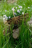 Basket with flowers in meadow