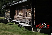 Old mountain cabin with geraniums in an Alpine pasture