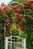 Rose arch at garden door