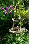 Tied plant supports in front of flowering dahlias in garden