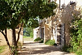 Drive in front of simple Mediterranean country house and shady tree opposite front door
