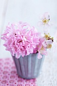 Pink hyacinth and twig of peach blossom in zinc container