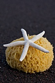 Starfish and sponge