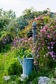 Nostalgic watering can next to garden standpipe in Mediterranean garden with rose bush