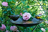 Birdbath with metal bird ornaments in front of rose bush in garden