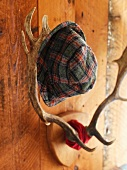 Hat hanging on antlers on wooden wall
