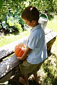 Young boy carrying a pumpkin to a garden bench