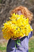 Child holding bouquet of daffodils in front of face