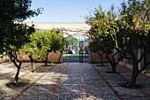 Herrschaftlicher Gartenanlage mit Orangenbäumen
