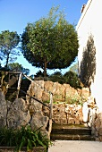 Rustic stairway in Mediterranean garden