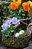 Wire basket planted with spring flowers and decorated with quails' eggs