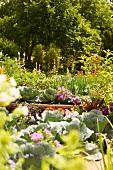 Sommerlicher Gemüsegarten