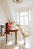 Little girl feeding dog at kitchen table