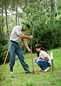 Man and teenage girl planting tree