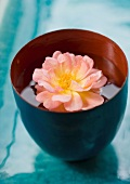 Flower head floating in cup