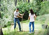 Couple planting tree