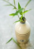 Sprigs of bamboo leafs in bottle