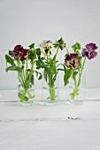 Three water glasses holding posies of pansies