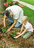 Man and girl planting flowers in yard together