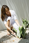 Woman crouching to touch snake plant (sansevieria trifasciata), full length