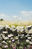Low stone wall and flowers